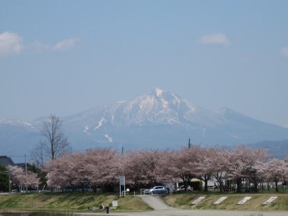 宮川の千本桜と磐梯山
