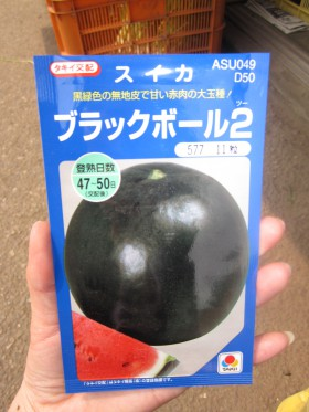 ↑ブラックボール  みなさんは黒いスイカ見た事ありますか?
