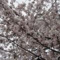 千本桜 2