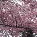 知恵桜 2