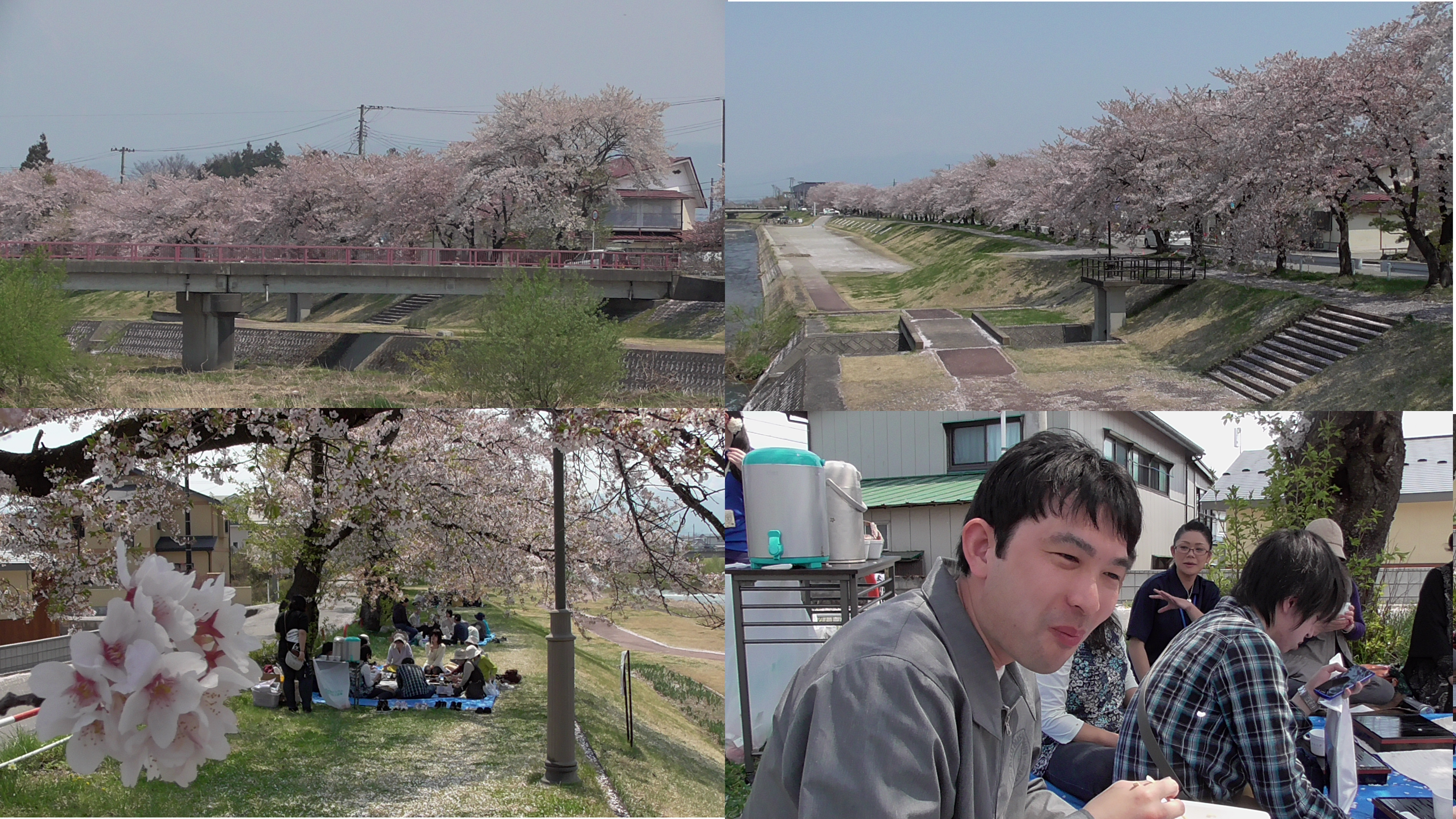 宮川 千本桜